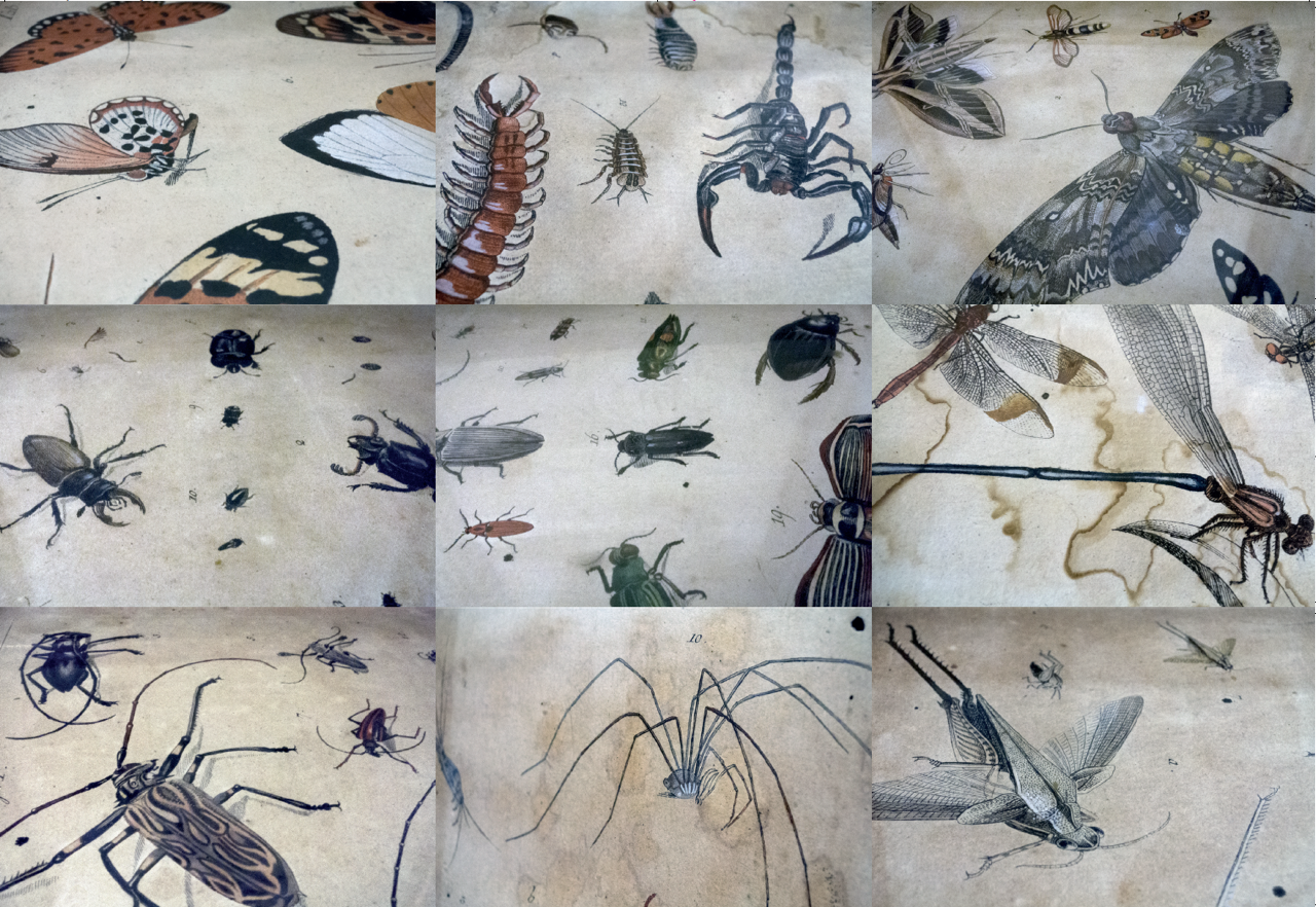 insectes 1 sylvie bussieres